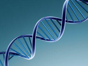 DNA não muda com cirurgia.