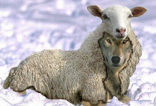 Em resumo, o Grupo Católicas pelo Direito de Decidir são como lobos em pele de cordeiro.