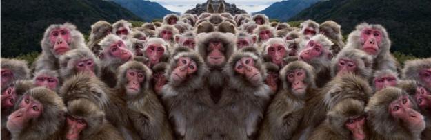 macacos-em-grupo