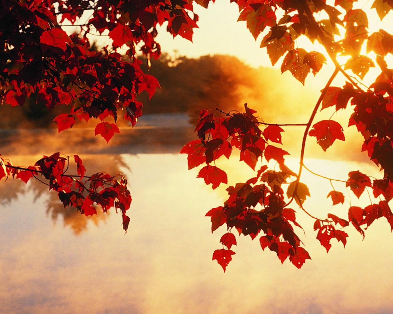 autumn-wallpaper-1280x1024-0912063
