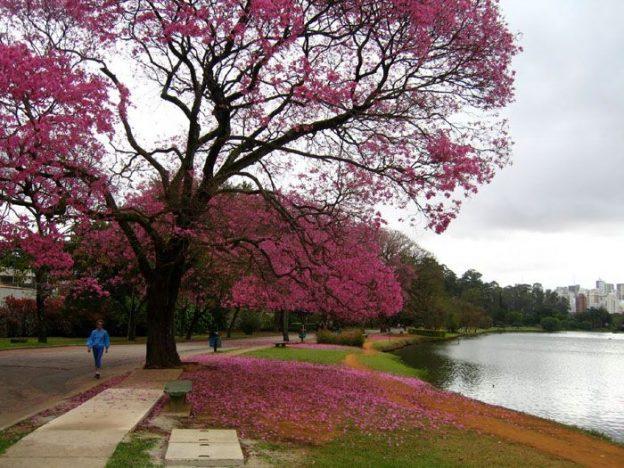 O maravilhoso Parque do Ibirapuera