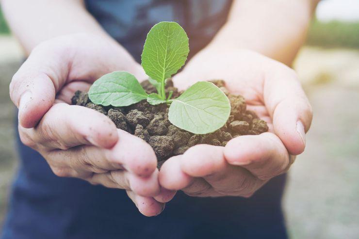 Mãos segurança brotinho de planta; preocupação ambiental é uma das características do empreendedorismo verde