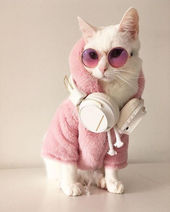 Gato branco, olhando de lado, com casaco rosa, óculos rosa e fone de ouvido no pescoço