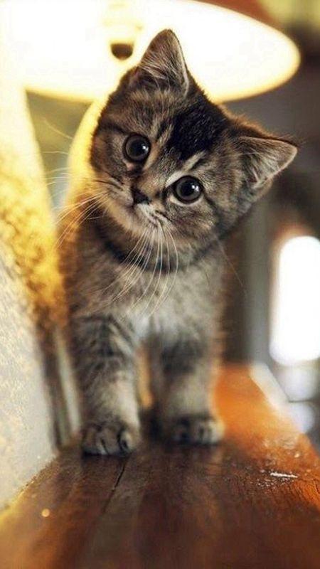 Gato mesclado olhando para a câmera com o rosto torto