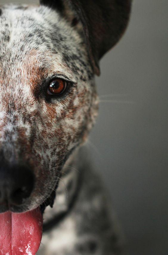 Metade de rosto de um cachorro