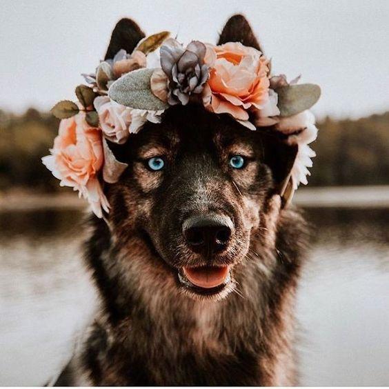 Cachorro com coroa de flores na cabeça