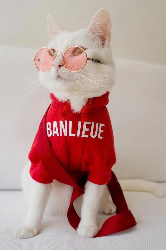 Gato branco de óculos rosa e um blusa vermelha