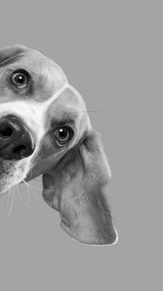 Cachorro só com os olhos aparecendo