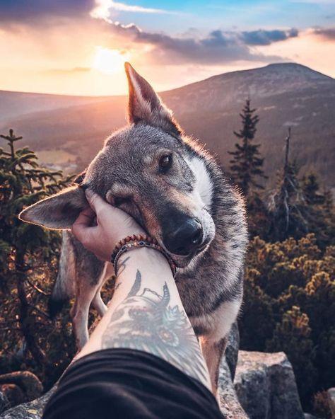 Cachorro deitado na mão de uma pessoa com uma montanha atrás