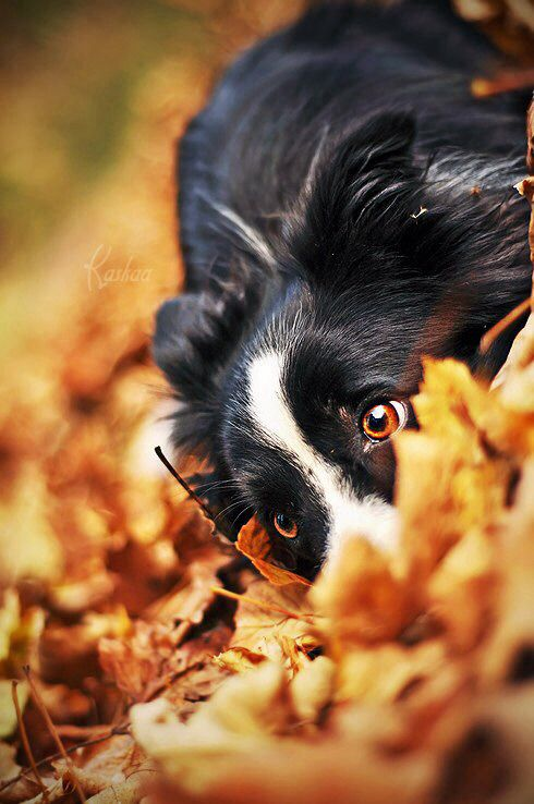 Cachorro preto brincando com plantas