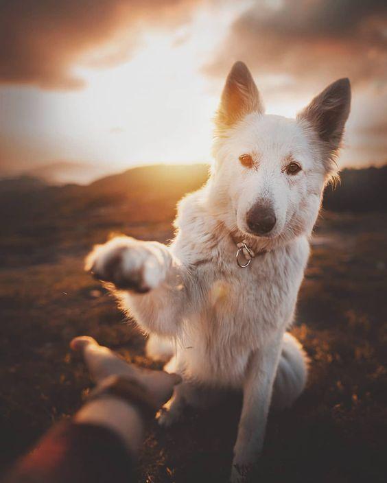 Cachorro com um cenário de pôr do sol atrás