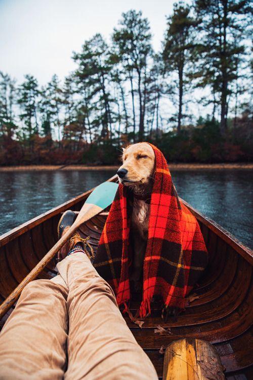 Cachorro dentro de uma embarcação, com uma coberta e umas plantas altas atrás