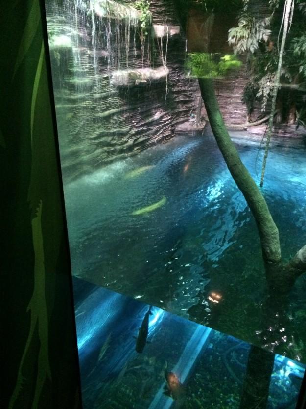 aquário parque explora
