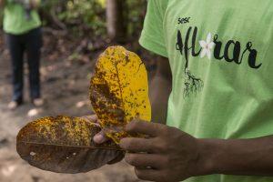 Duas mãos seguram folhas nativas do Estado.