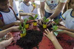 Sustentabilidade: a imagem mostra várias mudas de plantas sendo seguradas por crianças